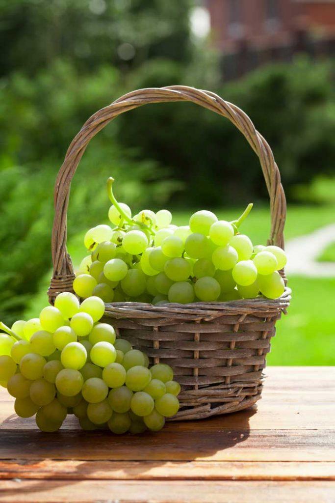 dieta dell'uva benefici